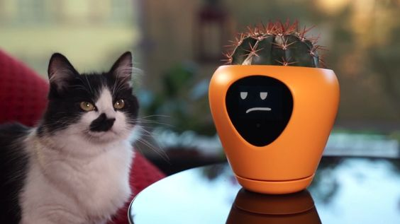 Lua, the smart planter with feelings!