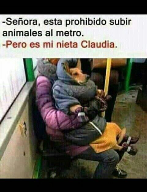 Pin De Isabel Rodriguez En Memes Perros Memes Perros Memes Divertidos Memes Graciosos