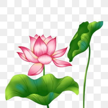 Spring Lotus Lotus Flower Lotus Leaf Lotus Clipart Spring Lotus Png Transparent Clipart Image And Psd File For Free Download In 2021 Pink Flowers Background Flower Clipart Flower Frame
