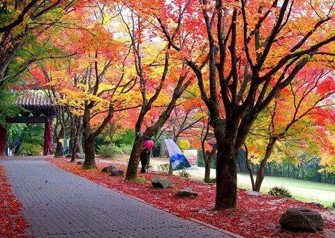 Phong cảnh hữu tình như trong tranh khi mùa thu tới