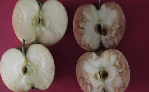 Teacher shows children the effect that mean words can have by using apples as example