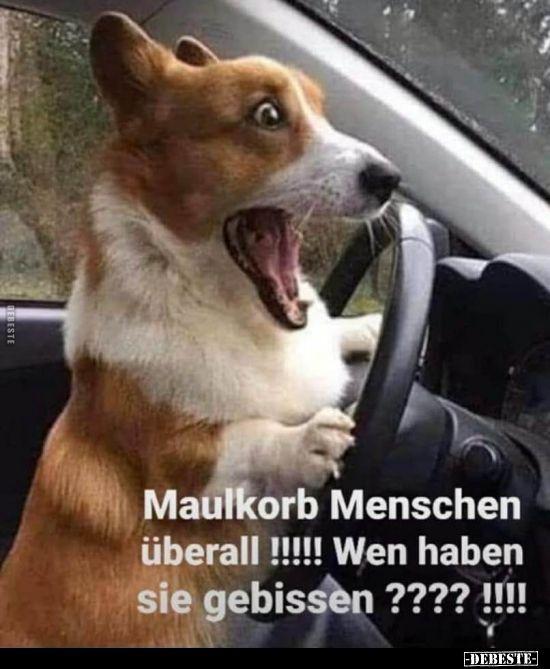 Maulkorb Menschen Uberall Lustige Bilder Spruche Witze Echt Lustig In 2020 Corgi Meme Lustige Hund Meme Tiere Hund
