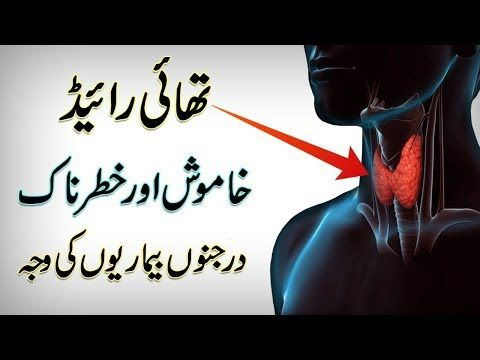 Symptoms And Causes Of Thyroid Diseases Thyroid Gland Function