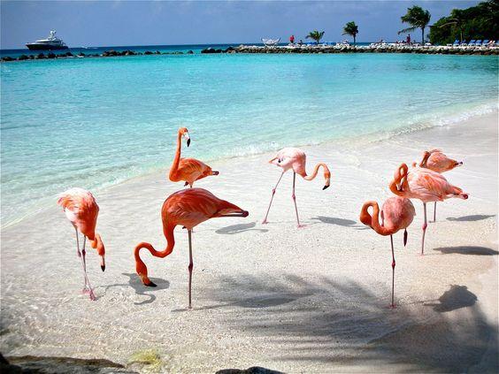 Cuando visites Aruba, te recomiendo visitar: Oranjestad, el Parque Nacional Arikok, los Molinos de oro, el Santuario de burros, la Granja de mariposas, la Granja de avestruces, el Santuario de aves Bubali, el Fort Zoutman, el Museo Numismático, el Museo Arqueológico, el Museo de Antigüedades, el poblado de San Nicolás, entre muchos lugares que ofrece Aruba.  También te recomiendo visitar sus playas: Arashi Beach, Malmok Beach, Palm Beach, Eagle Beach, Manchebo Beach, Druif Beach, Dos Playas…