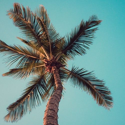 Free Background Music For Videos Youtube No Copyright Download Instrumental Edm Tropical House By N Free Background Music Tropical House Music Background