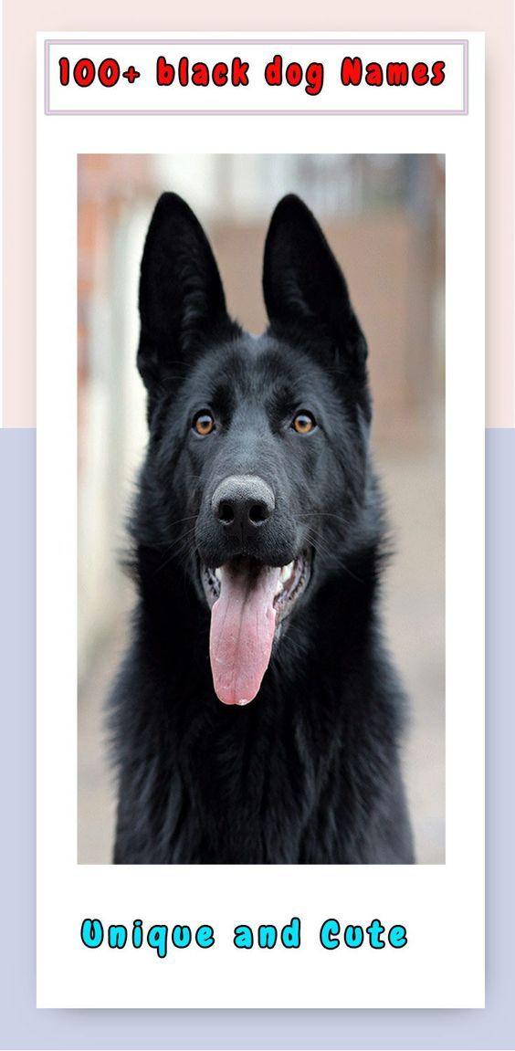 Dachshund Dog Names Dog Names Girl Dog Names Cute Girl Dog Names