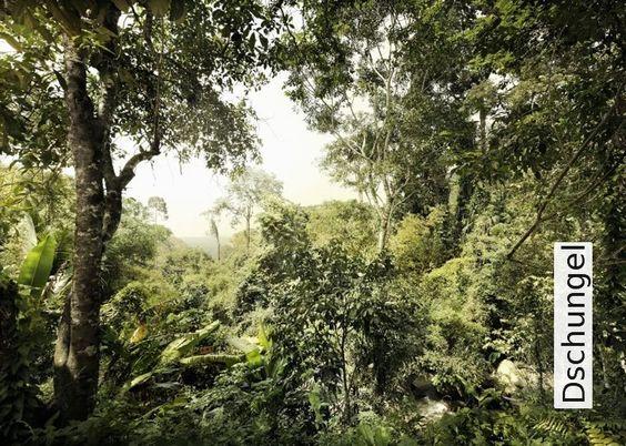 Tapete Dschungel | Die TapetenAgentur