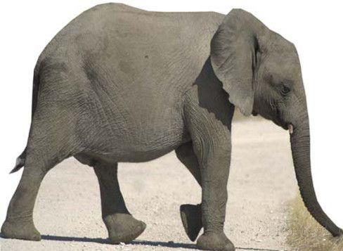 Baby-Elefant Pappaufsteller bei AllPosters.de
