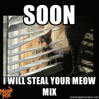 Soon. I will steal your Meow Mix.