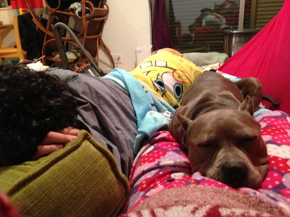 lay dawn Pit Bull with Family. :)