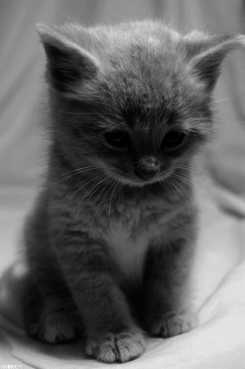 Wonderful Cute Kittens For Sale Manchester Marvelous Kittens Cutest Cute Animals Cute Cats