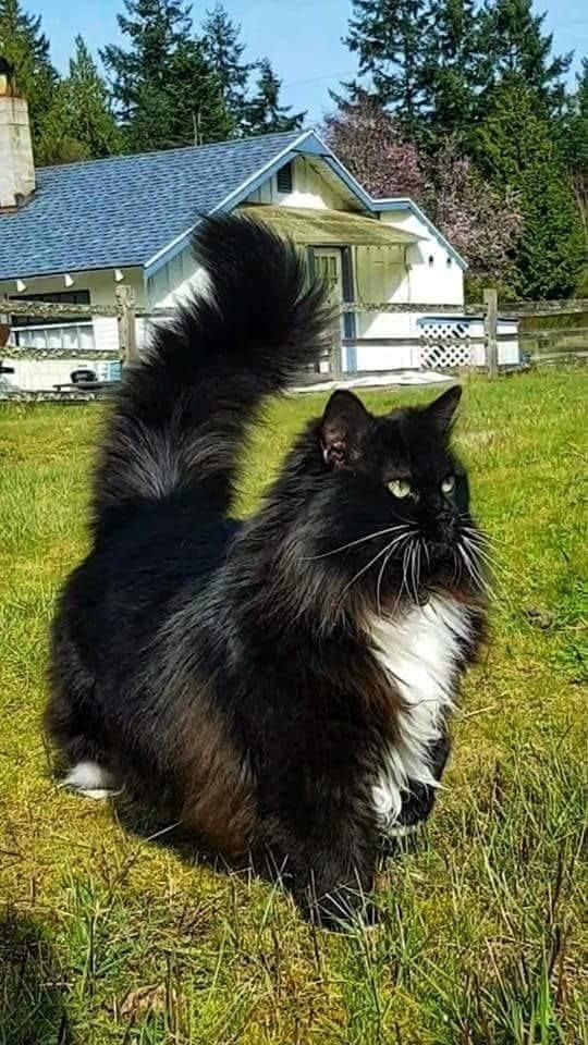 Me And Ma Tail In 2020 Cute Cats Cats And Kittens Cute Animals