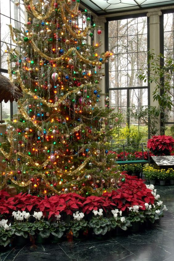 ~ Beautiful Christmas Tree in the Conservatory of ...