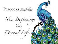 peacock tattoo meaning - Google Search