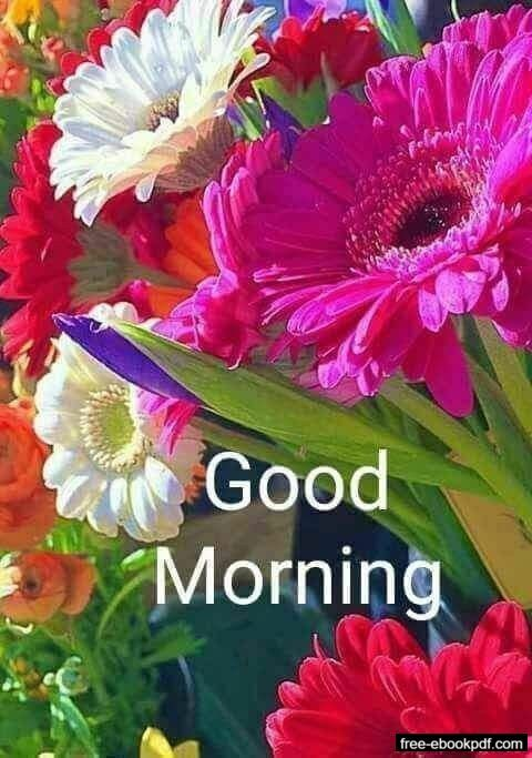 Positive Good Morning Message Good Morning Flowers Good Morning Flowers Pictures Good Morning Images Flowers