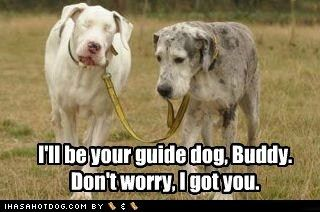 this reminds me of my sweet pea and rico when she lost her sight he always made sure to bring her home