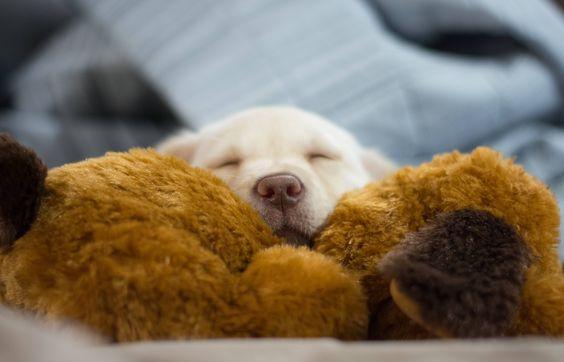 Pupper Zelda (Nat'l love your pet day) http://ift.tt/2lAPFwP
