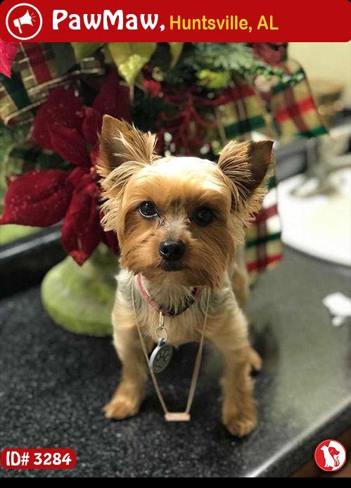 Help Milo Is Lost Losing A Pet Yorkie Terrier Pets