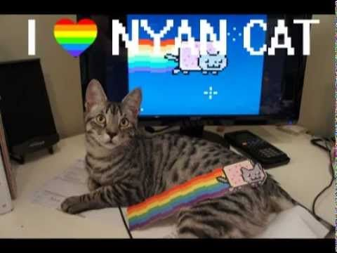 Syncro starring in: Cat Loves Nyan Cat  ♥ my kitty!