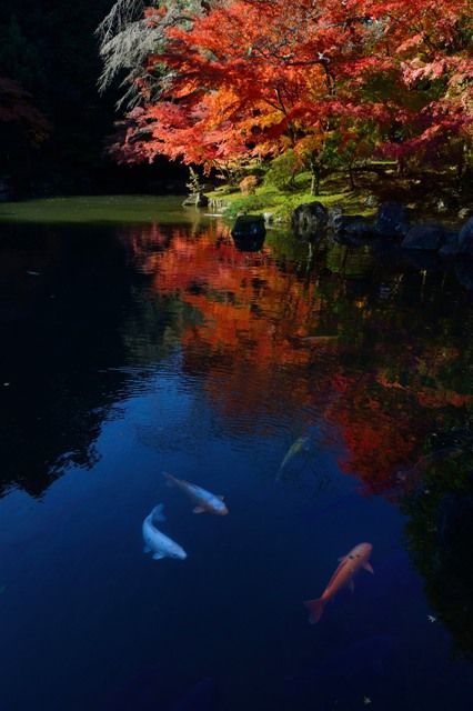 Beautiful JAPANの写真(画像)・写真集 - 写真共有サイト:PHOTOHITO