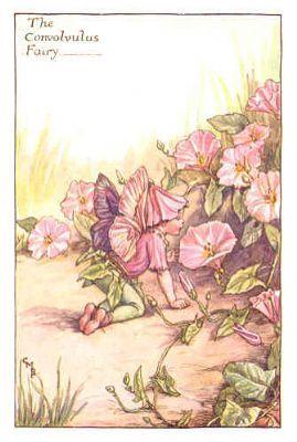 FLOWER FAIRIES 1940's: Convolvulus Fairy. Vintage Print. Artist: Cicely Barker