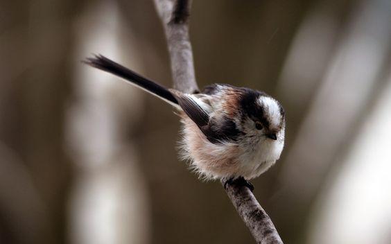 3840x2400 Wallpaper bird, branch, thick