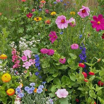 cottage garden  - Basket-of-Gold, Candytuft, Classic Zinnia, Cornflower, Corn Poppy, Cosmos, Forget-Me-Not, Four O'Clocks, Foxglove, Gloriosa Daisy, Johnny Jump-Up, Love-in-a-Mist, Maltese Cross, Perennial Lupine, Rocket Larkspur, Shasta Daisy, Sweet Alyssum, Sweet William Pinks, Tree Mallow and Cut-and-Come-Again Zinnia.