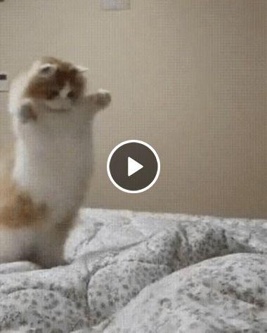 Gatinho fofo miau brincando na cama