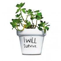 Pot de fleur I Will Survive