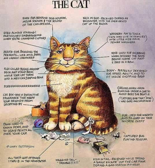 The Cat by Gary Patterson: