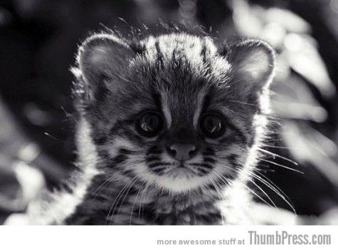 For days when you feel stabby. Stabbing people makes kitten sad.