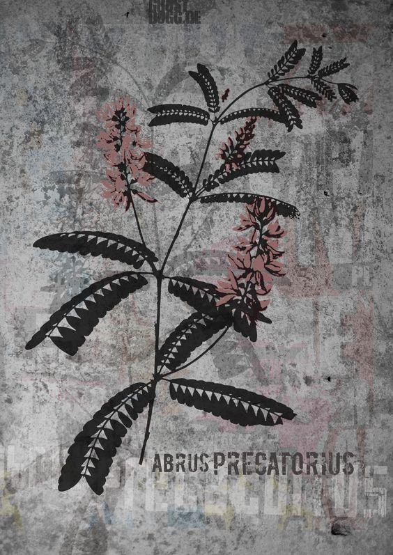 AbrusPrecatorius #Medizinalpflanze # ghostdogg #streetart