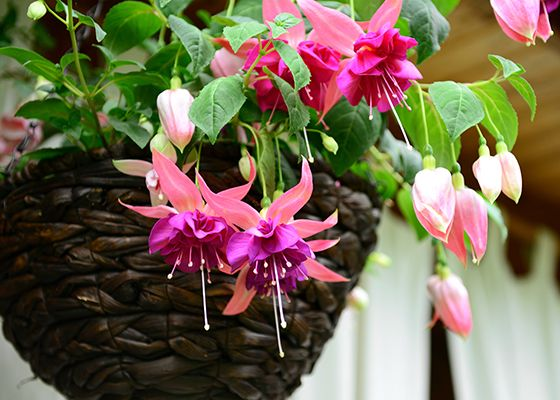 Outdoor Living Ideas The Home Depot Hanging Flower Baskets Plants For Hanging Baskets Hanging Plants