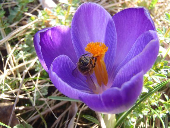 gedeckter Tisch für die Biene