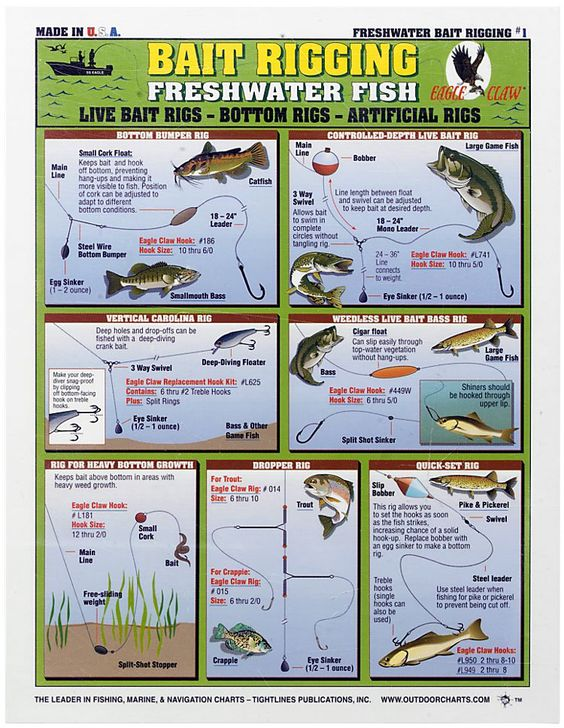 Waterproof fishing chart freshwater bait rigging the o for Best bait for freshwater fishing
