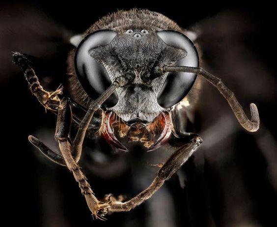 Macro arthropoda :  les dessous des insectes