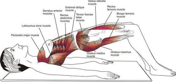 Músculos que intervienen en el ejercicio de puente de Pilates