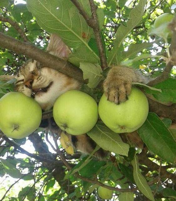 Коты с сокрушительной харизмой, сопротивляться которой бесполезно