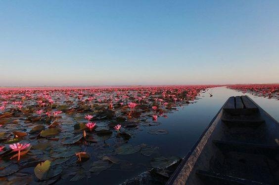 Озеро розовых лотосов. - Путешествуем вместе
