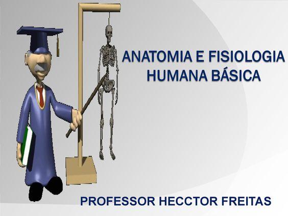aula-04-anatomia-e-fisiologia-humana by Lucas Mendes Silva via Slideshare