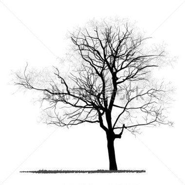 desenho da árvore - vector detalhada vetorial                                                                                                                                                      Mais