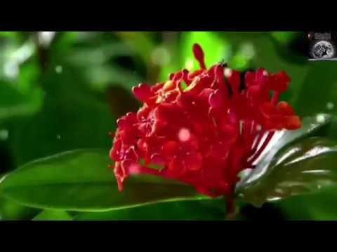 Youtube Most Beautiful Beautiful Islamic Videos