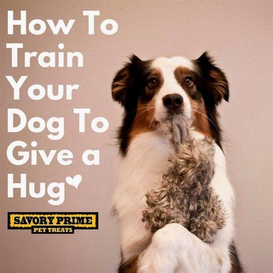 Dog Training Fetch Dog Training Zanesville Ohio Dog Training