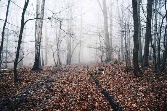 Autumn is definitely the best season of the year!  by lukasdegroodt