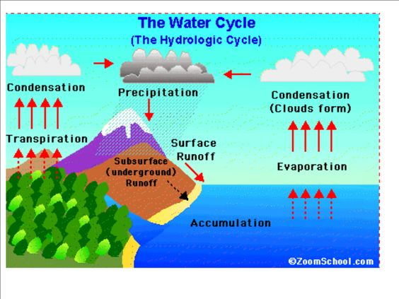 printable water cycle diagram   water cycle print this pcture    printable water cycle diagram   water cycle print this pcture please