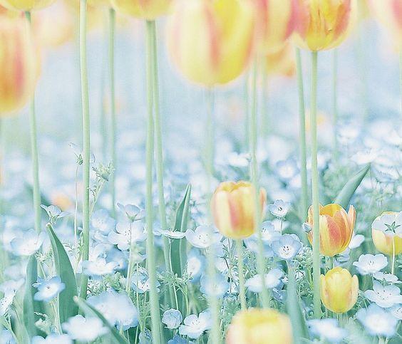 春の足もと