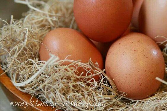 #eggs #egg #nest