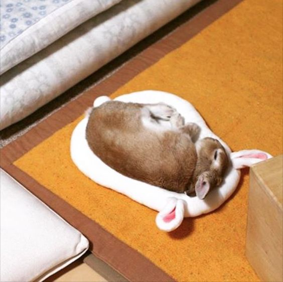 Cute rabbit on Futon found on https://www.facebook.com/ForgetMeNotCoco