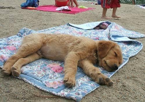 37 Hunde Die So Mude Sind Wie Du Dogs Puppies Super Cute Animals