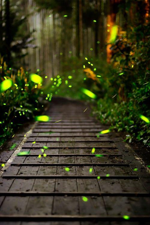 Fireflies...: